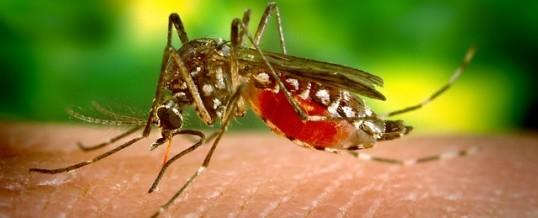 Amit tudni érdemes a terhesség alatti Zika vírus fertőzésről